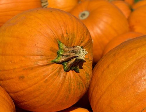 Pumpkin Delivery has been delayed at Sedona UMC