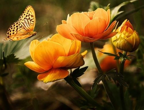 Happy Mother's Day! Celebrate with Sedona UMC — Online Worship