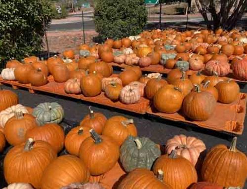 Better Hurry! The Pumpkin Patch is Open Daily Through Halloween